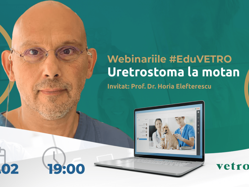 Uretrostoma la motan: Tehnici chirurgicale - avantaje și dezavantaje, Prof. Dr. Horia Elefterescu